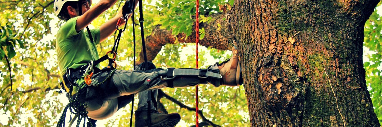 potature alberi ad alto fusto macerata