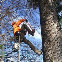 potature alberi ad alto fusto macerata tree climbing